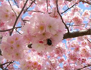 Весна, творчество, Солипсизм.Ру